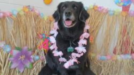 Luau Party in Doggy Daycare