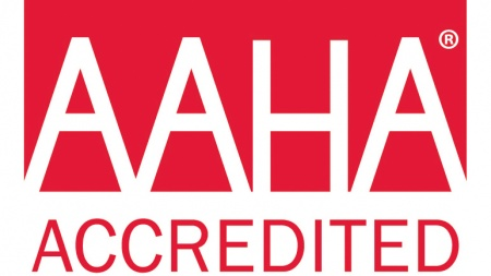 Why Choose an AAHA Accredited Practice