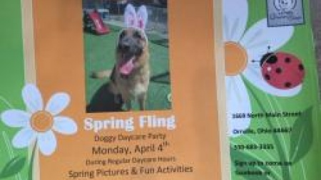 Spring Fling Daycare Party