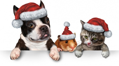 Holiday Hazards for your cat and dog